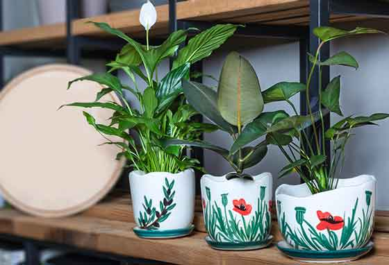 greening-offices-indoor-plant-peace-lily