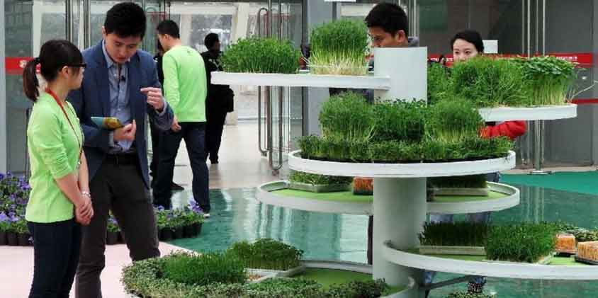 indoor plant-for-greening-office