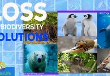 Loss Of Biodiversity Solutions